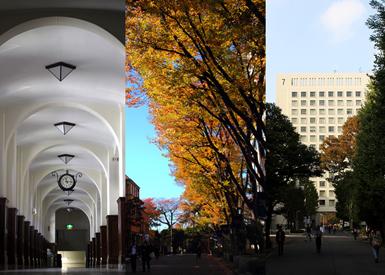 キャンパス内は緑に囲まれ、正門からのびるメインストリートには多くの学生たちが行きかう