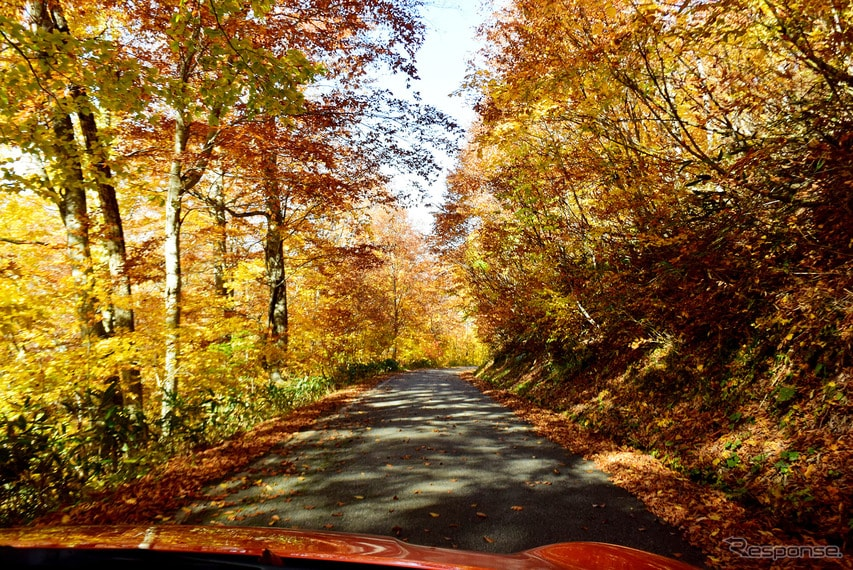 金色の紅葉トンネルを走る。