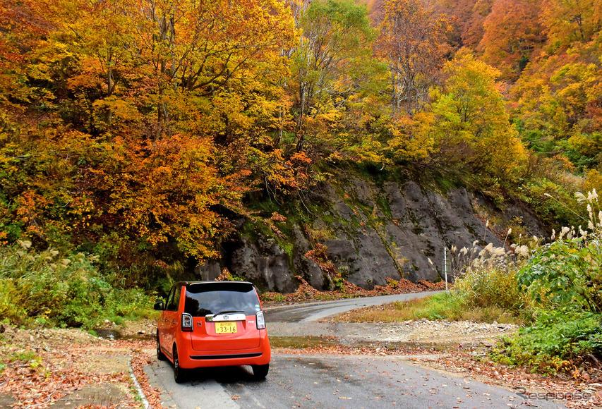 奥只見湖岸の紅葉は尾瀬界隈とは異なる色合い。