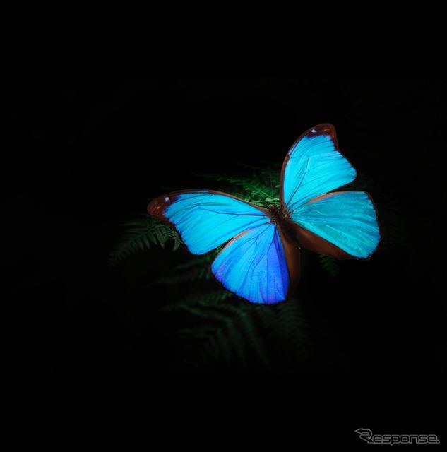 光を受けると特定の波長だけが反射、強調される構造発色